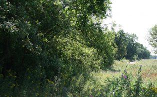 WVR treeline of trackbed to Chevening 1