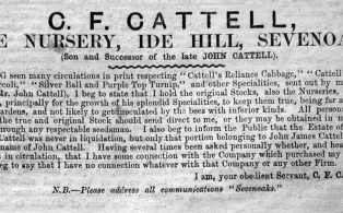 Advertisement for Pine Nursery by C.F. Cattell in the Westerham Herald